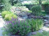 Pond Photo